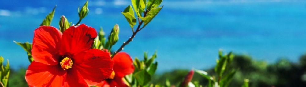 有名な沖縄ユタの口コミ情報|沖縄の占い師情報